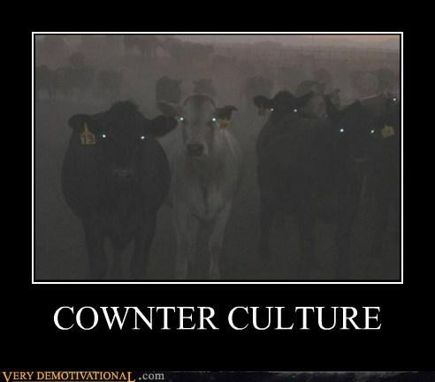 counter culture cow evil hilarious pun - 6348277504