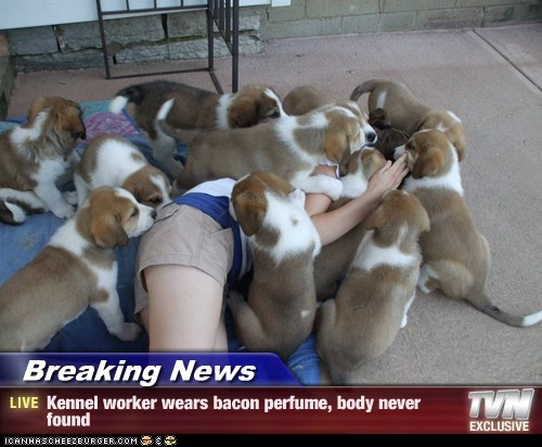 bacon,Breaking News,danger,dogs,girl,perfume,puppies,what breed