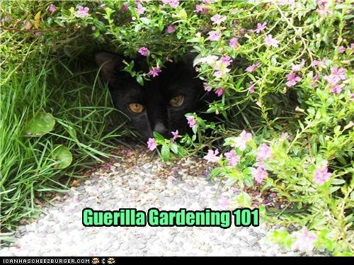 camouflage flowers garden gardening guerilla hide plants secret - 6348330240