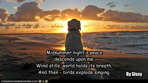 Midsummer night's peace descends upon me. Wind stills, world holds its breath. And then - birds explode singing. By Sissy