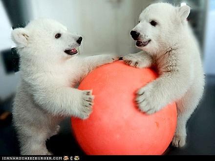 around the interwebs bear cubs bears cubs people pets polar bears - 6348570880
