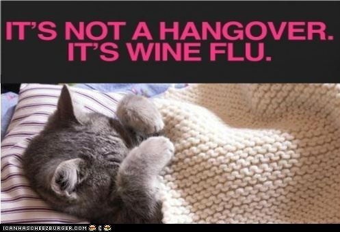 alcohol best of the week Cats drunk flu hangovers lolcats puns swine flu wine - 6348710912