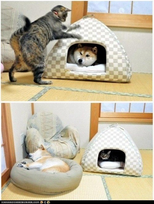 beds,Cats,dogs,goggies r owr friends,multipanel,pets,takeover,vs