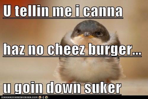 Cheezburger Image 6348901888