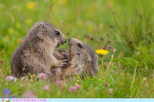 drama love prarie dogs romance wild flowers