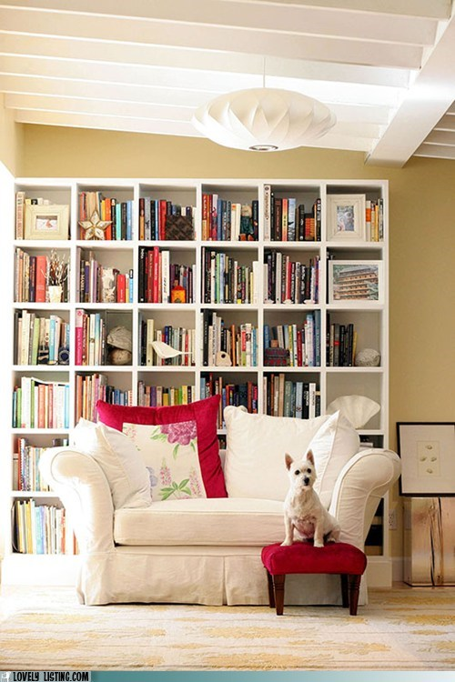 bookcase books dogs shelves - 6349249024