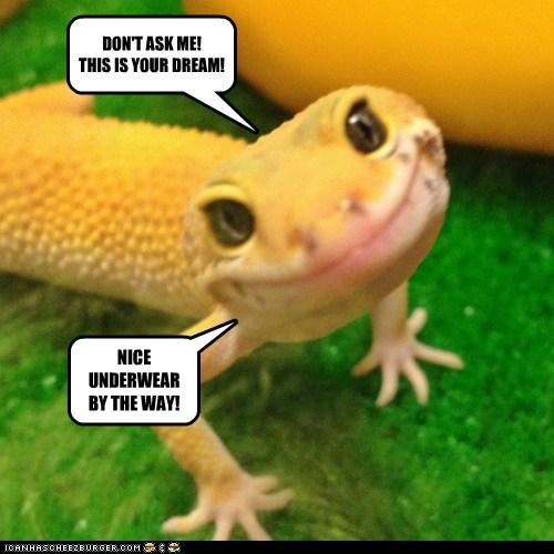 dream gecko nice smile trippy underwear - 6349366272