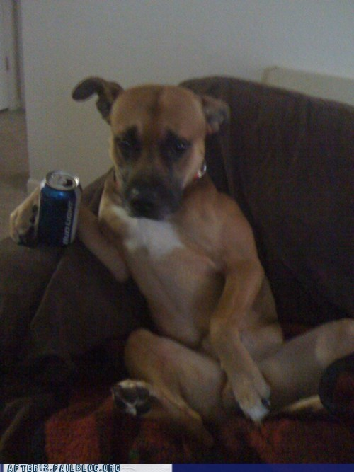 beer boxer,breakup,bud light,cc,crunk critters,dating,relationships