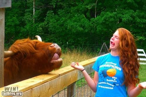 animals derp herp redhead - 6349567744
