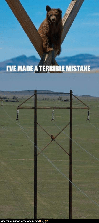 bears,mistakes,multipanel,oops,stuck,telephone poles,terrible mistake