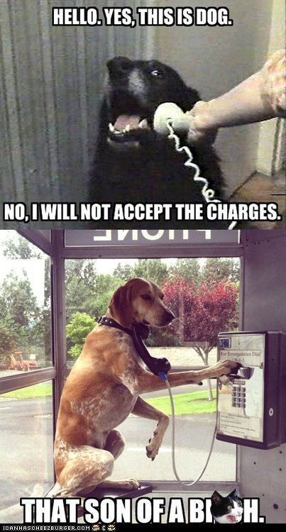 collect calls,dogs,hello yes this is dog,Memes,multipanel,pay phones,phones