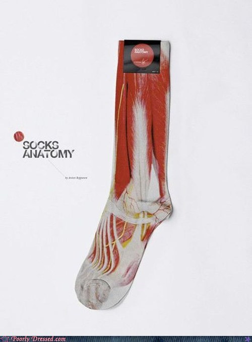 anatomy gross muscle socks - 6349709824