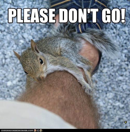 PLEASE DON'T GO! .
