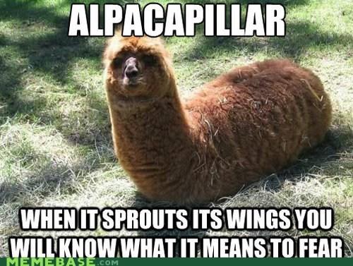 alpaca butterfly caterpiller fear Memes wings - 6349748224