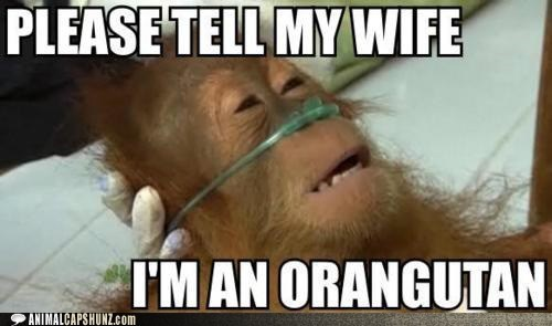 orangutan,revelation,sick,vet,wife