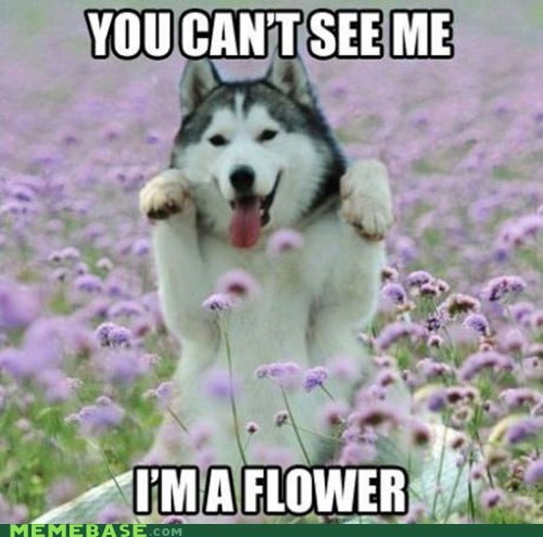 dogs,Flower,husky,invisible,Memes,purple