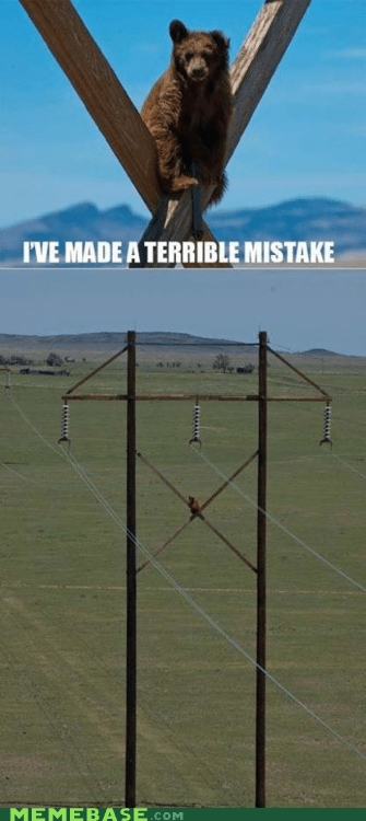 arrested development,bear,Memes,powerlines,terrible mistake