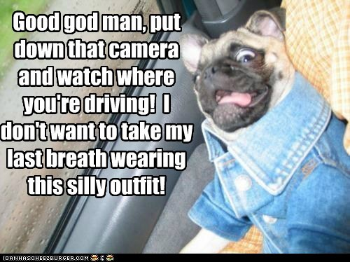 be careful,camera,car,car crash,costume,dogs,jacket,pug