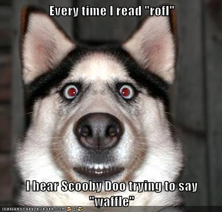 best of the week captions dogs Hall of Fame huskie realization rofl scooby doo scoobydoo waffles - 6350128896