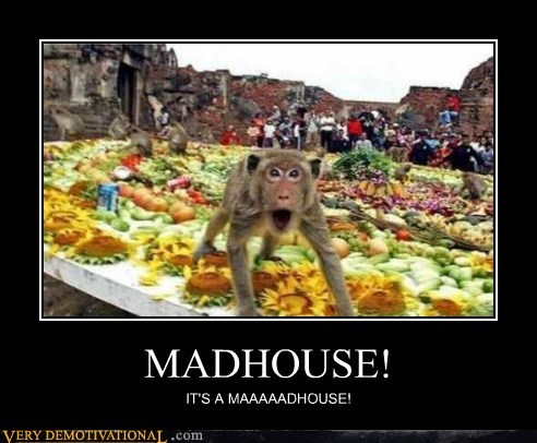 hilarious,madhouse,monkey,scared,wtf