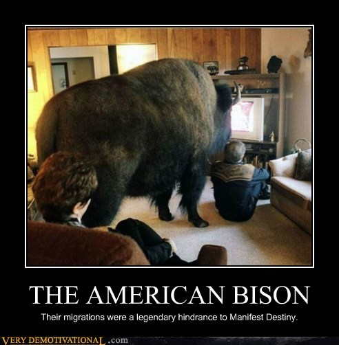 THE AMERICAN BISON Their migrations were a legendary hindrance to Manifest Destiny.