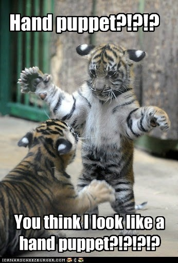 arguing,cub,fighting,hand puppet,insulted,posing,tiger