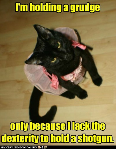 angry,Cats,dexterity,do not want,dressed up,grudge,hate,hold,lolcats,revenge,shotgun