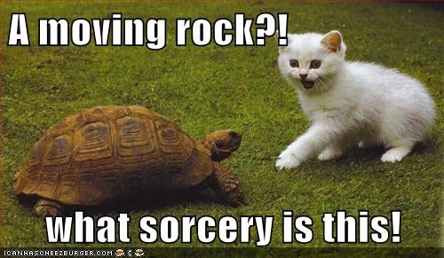 cat,heard,moving,rock,sorcery,startled,surprise,turtle