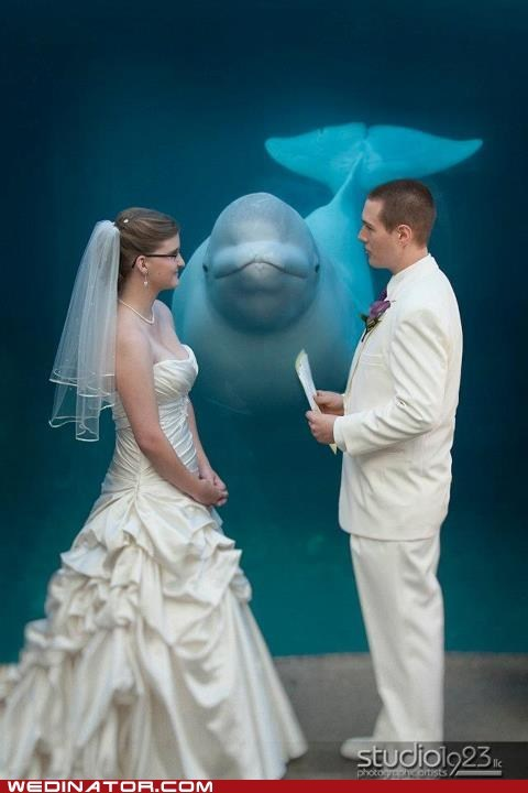 belugas,bride,funny wedding photos,groom,vows,whales