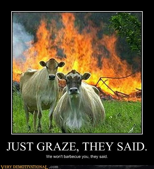 angry cows fire graze hilarious - 6350644224