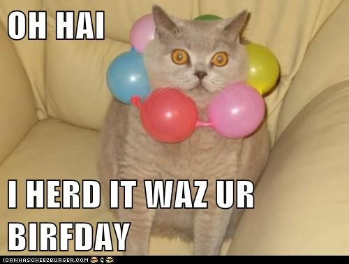 Balloons,birthday,cat,derp,lolspeak