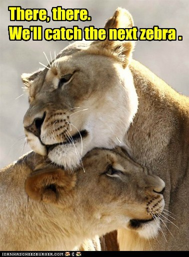 meme of two lions comforting each other with the caption saying that the next zebra the will catch together.