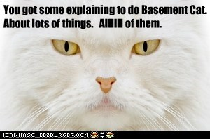 You got some explaining to do Basement Cat. About lots of things.   Allllll of them.