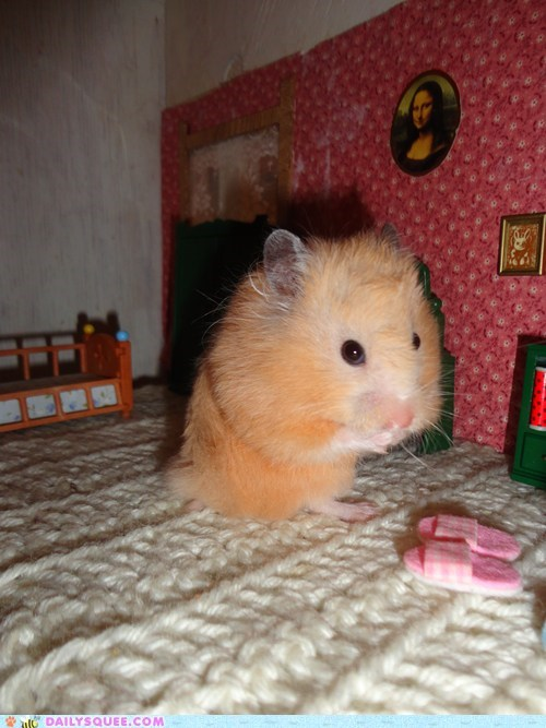 dollhouse hamster pet reader squee