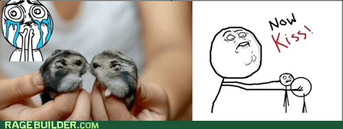 cuteness overload,now kiss,Rage Comics,rodents