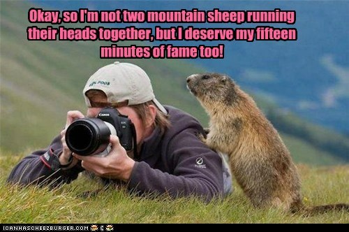 Okay, so I'm not two mountain sheep running their heads together, but I deserve my fifteen minutes of fame too!