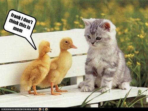 cat,confused,ducklings,frank,kitten,lost,mom