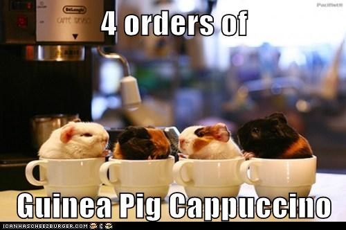 cappuccino,captions,coffee,coffee shop,cups,guinea pigs,orders