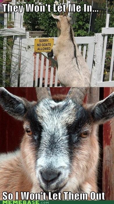 fence,gate,goat,PTSD Clarinet Ki,PTSD Clarinet Kid