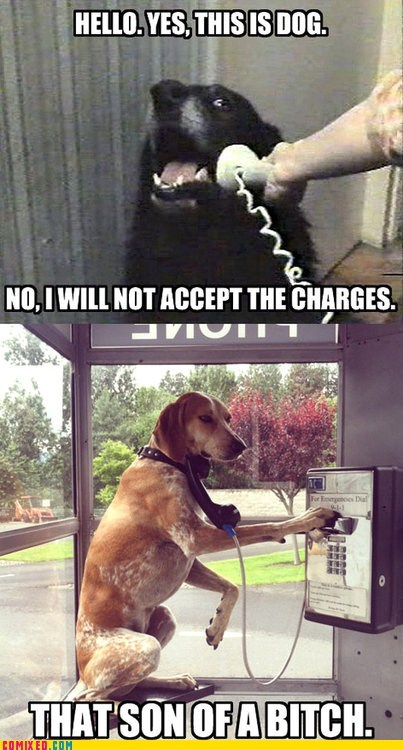 curse you pay phones the internets this is dog