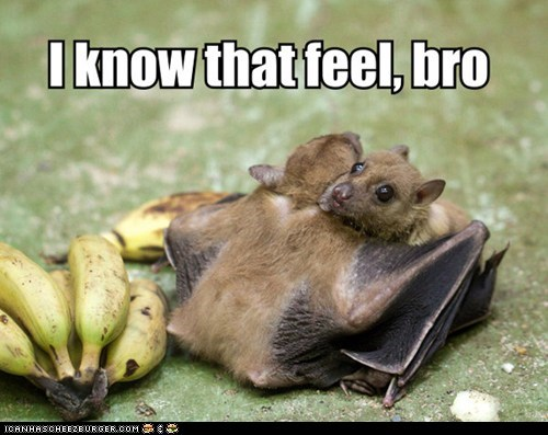 bats bros feels hugging hugs i know that feel i know that feel bro