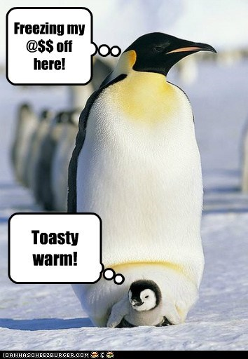 Daily life when you're a penguin Freezing my @$$ off here! Toasty warm!