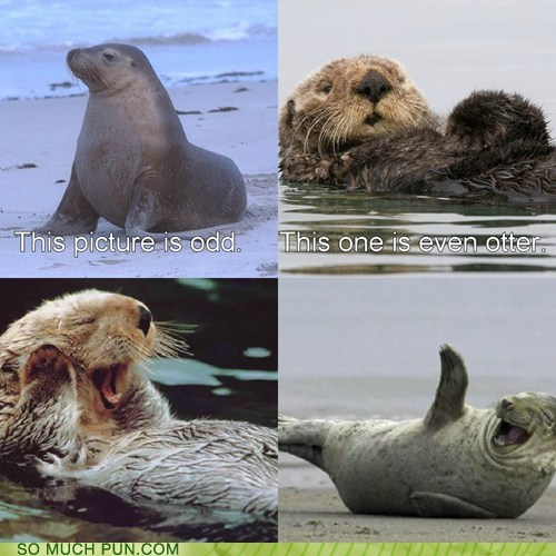 comparison Hall of Fame literalism odd otter seal similar sounding - 6352387072