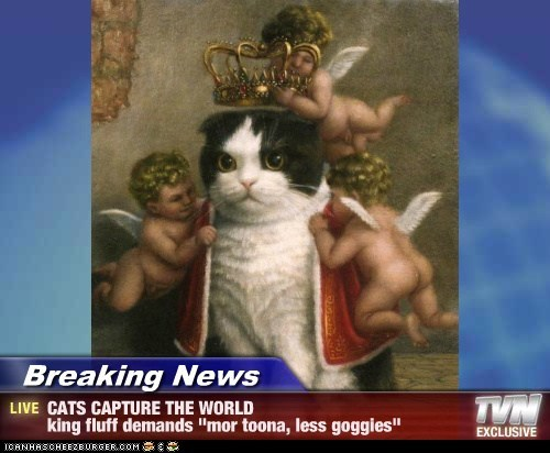 "Breaking News - CATS CAPTURE THE WORLD king fluff demands ""mor toona, less goggies"""
