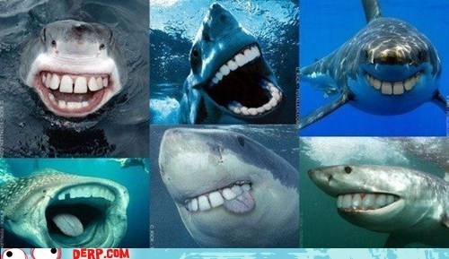 best of week derp photoshop shark teeth