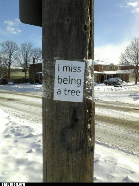 flyer,i miss being a tree,telephone poles