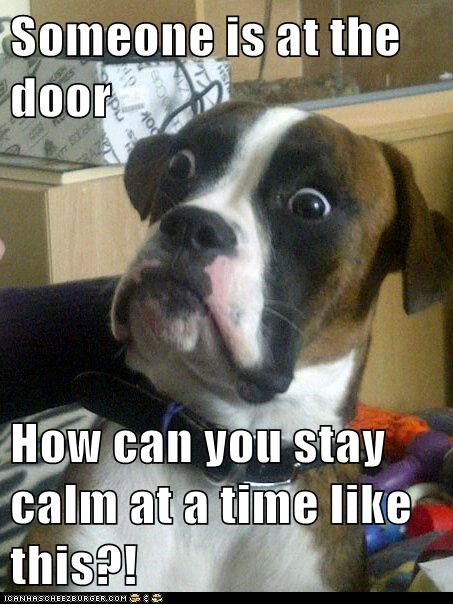 Someone is at the door How can you stay calm at a time like this?!