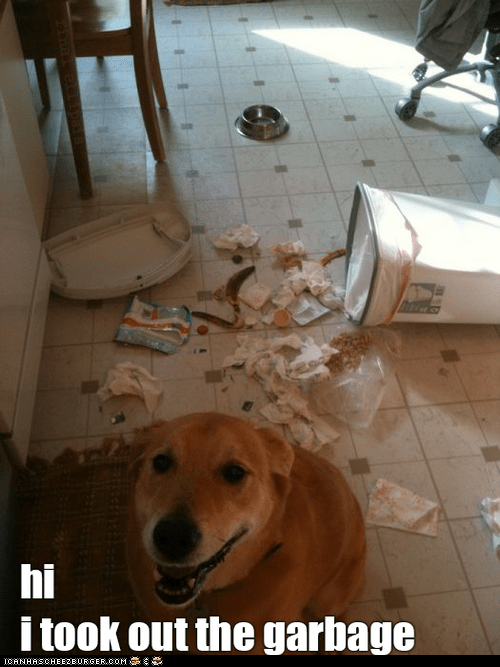 chores,destruction,dogs,FAIL,garbage,gross,hi,messes