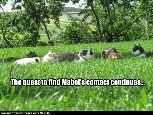 The quest to find Mabel's contact continues...