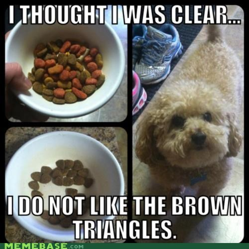 colorblind dogs ignore Memes triangles - 6352992256